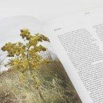 Het voedselbos – spread met tekst en beeld